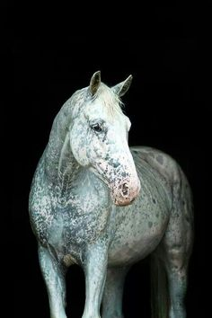 water speckled horse