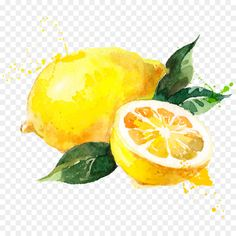 Fruits Drawing, Food Drawing, Painting & Drawing, Watercolor Paintings, Watercolors, Lemon Painting, Lemon Watercolor, Watercolor Flowers, Lemon Drawing