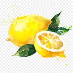 Lemon Painting, Lemon Watercolor, Watercolor Fruit, Fruit Painting, Watercolor Flowers, Fruits Drawing, Food Drawing, Painting & Drawing, Watercolor Paintings