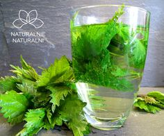 Herbatka i ocet z pokrzywy | Naturalnie Naturalni Celery, Glass Vase, Herbs, Vegetables, Recipes, Food, Kitchen, Magick, Diet