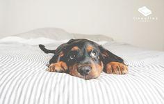 Per caso ci siete anche voi tra quelli che se lo portano anche a letto? #cane #amico