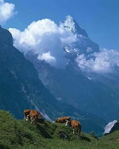 Eiger The clinking of the cow bells the crisp weather the fresh air Ahhhhh Switzerland I love it Great Places, Places To See, La Provence France, Beautiful World, Beautiful Places, Ushuaia, Swiss Alps, Beautiful Landscapes, Switzerland