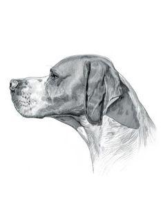 Pointer Dog