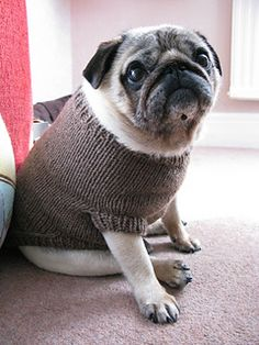 My lovely Pug Frank is getting old and appears to have lost quite a lot of his coat and in the cooler weather feels a little chilly! This little sweater is knitted with worsted weight yarn in the round from the top down with a ribbed trim around the edges .