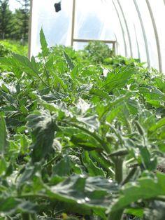 Alberta Home Gardening: Hoop Frame Greenhouse update Home And Garden, Plants, Gardens, Cob Building, Pvc Pipes, Greenhouse Gardening, Plant, Planets