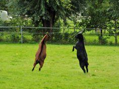Kangaroo, Horses, Animals, Baby Bjorn, Animales, Animaux, Animal, Animais, Horse