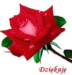 Dziękuję Beard beardo o rourke Happy Birthday Wishes Cards, Beautiful Rose Flowers, Rose Images, Prayer Quotes, Emoticon, Edgy Memes, Red Roses, Motto, Manicure