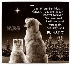 Our pets in Heaven .. ❤️