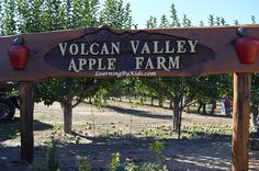 VISITING THE ORCHARD DURING AUTUMN'S APPLE FESTIVAL  -----  Apple Festival Farm | Learning By Kids | LearningByKids.com
