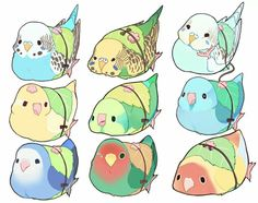 little chibi animals Cute Animal Drawings, Bird Drawings, Kawaii Drawings, Cute Drawings, Chat Kawaii, Kawaii Art, Bird Doodle, Budgies, Parrots