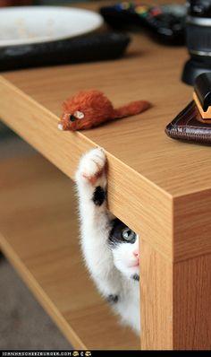 playful kitten so cute!