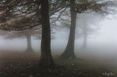 Me encanta la niebla, me encanta la niebla, me encanta la niebla, me encanta la niebla. ¿He dicho que me encanta la niebla?  La niebla lo cambia todo y permite hacer fotos imposible, abstraer elementos, ocultar el fondo, en definitiva, te permite hacer fotos más minimalistas.  #naturaleza #niebla #arboles #minimalismo #monte #bosque #sierradeurbasa #urbasa #forest #fog #landscape #minimalist #nature #navarra #otoño