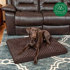 Furhaven's goal is the comfort of your pet at a price you can afford. Shop our site for the latest and greatest in dog or cat bed styles and pet accessories! Pet Stairs, Cat Perch, Orthopedic Dog Bed, Cool Dog Beds, Homemade Dog Treats, Pet Beds, Pet Accessories, Large Dogs, Your Pet