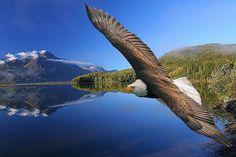 """2""""Dê a quem você ama: asas para voar, raízes para voltar e motivos para ficar.''  Dalai Lama"""