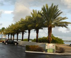 We have a beautiful view of palm trees and water each morning! www.theinnatkeywest.com