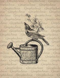 Bird arrosage Pot Antique Illustration graphique imprimable Vintage Collage numérique feuille Image téléchargement transfert Sepia