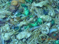 Noodles com legumes e peru - Receita Petitchef