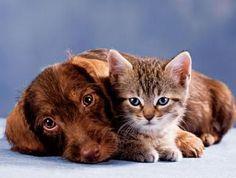 Eco-consigli per la cura di cani e gatti domestici