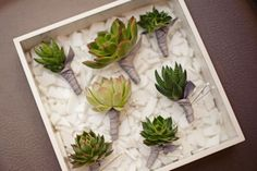 Succulents are eco-friendly water retaining plants that have been popping up in Weddings all throughout 2011. I just love the eco-chic simplicity of these succulent boutonnieres.