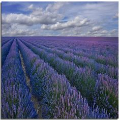 the most beautiful image of a lavender field in France! heavenly!