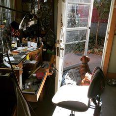 "@hartleystudio ""Some days, the sun streams into my studio, warming both of us while we enjoy the gorgeous weather. #vizslagram #vizsla #studiolife #hartleystudio…"""