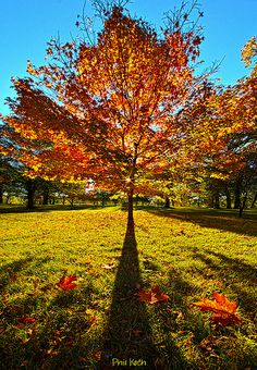 Three Leaves Down. Life, light and color - Galeria de Phil Koch. 25/10/2013. Canon EOS 7D.