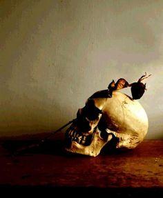 vanitas,skull and grapes,2011 - sueskitt | Photography - Still Life | Art Gallery