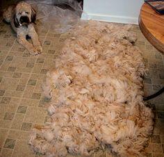 preparing alpaca fleece