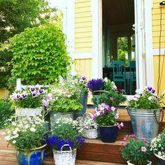 Terassimme on kukkakeidas. #futuremarja #hyväjäke #kesä #kesäloma #kesäkukat