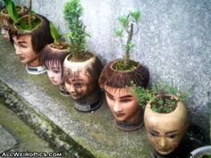 Pot Heads on weird pics