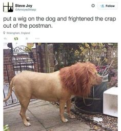 Put a wig on the dog & scare the crap out of the mailman!