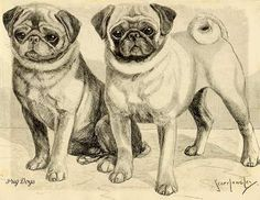 vintage pug pictures   Pugs, two pugs together, Antique Print 1930's