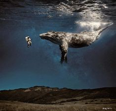 Surreal Animals Photo Manipulations by Karen Cantú Q #art #photography #KarenCantúQ #SurrealAnimalsPhotoManipulations