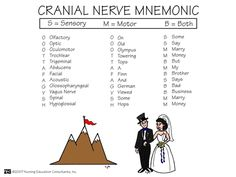 Cranial Nerve Mnemonic....this is for the students..... :)