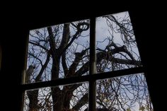 View from the attic window of Anne's tree. View from the attic window of Anne's tree. Anne Frank, Attic Window, Window View, Autumn Trees, Windows, World, History, Libraries, Wwii
