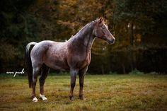 Horse Photography - Anna Panke • Photography