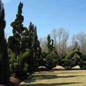 Amazing garden of Pearl Fryar from the documentary Topiaries that I watched with my auntie jeanne :)