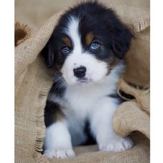 that puppies eyes are so cute