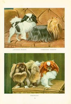 This animal painting marked by Louis Agassiz Fuertes is taken from The Book of Dogs published in 1919 by The  National Geographic Society, Washington D.C., U.S.A. Louis Aga...