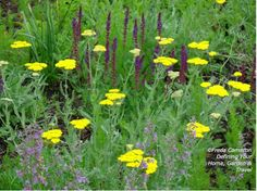 Achillea 'Moonshine' with Salvia 'Caradonna' and Nepeta 'Six Hills Giant'; by Freda Cameron at Defining Your Home