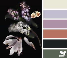 design seeds color tulip - Google Search