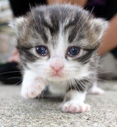 cute kitten takes first steps