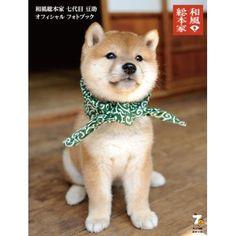Japanese dog  柴犬 豆柴