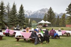 The Dog Days of May at the Jasper Park Lodge.