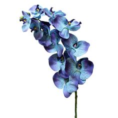 Afloral.com Signature Phalaenopsis Silk Orchid Spray in Blue -37 Inches. You've asked and we answered. We are proud to add this Afloral.com signature blue orchid to our silk flowers category. This stem has 11 blossoms with a stunning mixture of royal blue and hints of purple. The Centers have a softer blue with a touch of green.
