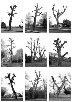 Typology of trees. Photography by Mark Able.