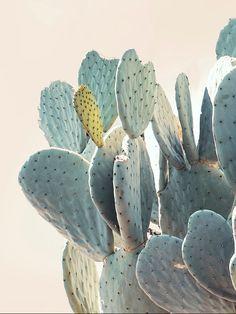 Désert détails-grand Cactus Fine Art par WilderCalifornia sur Etsy