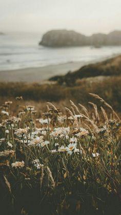 Blumen am Strand – schöne Hintergrundbilder – Flowers on the beach – beautiful wallpapers – #