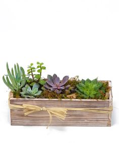 An design of echeveria succulents planted in a wooden rustic container. An easy to care for gift with flare. #CityLineFlorist