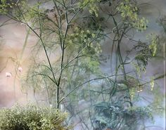 Hi Friends! I wanted to introduce someone with you whose work I am truly obsessed with. Her name is Claire Basler. A French floral painter, she resides at Chateau de Beauvoir, a century castle in France which is art in itself. Her interpretation of. Clare Basler, Plant Drawing, French Artists, Botanical Art, Landscape Architecture, Painting Inspiration, Photo Art, Flowers, Catalogue